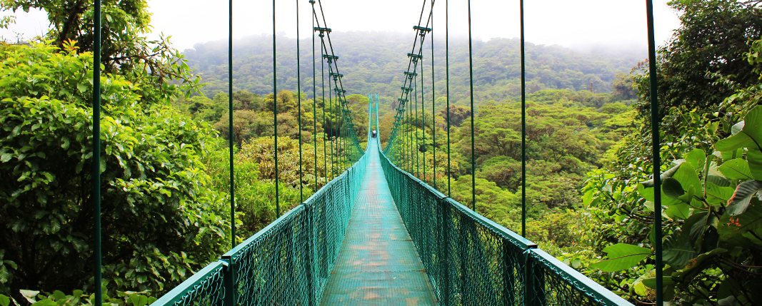 Monteverde Selvatura hanging bridges